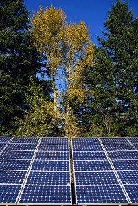 Oregon trees and solar