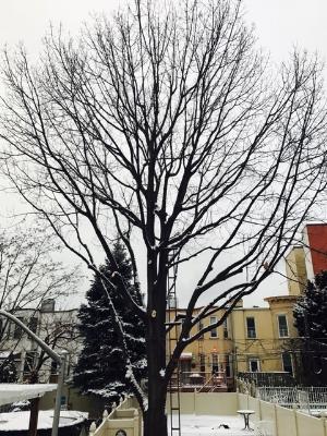 tree needs pruning