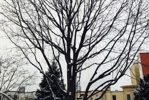 How to tell if a tree needs pruning