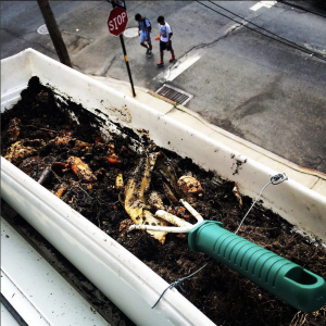 Composting in a window box