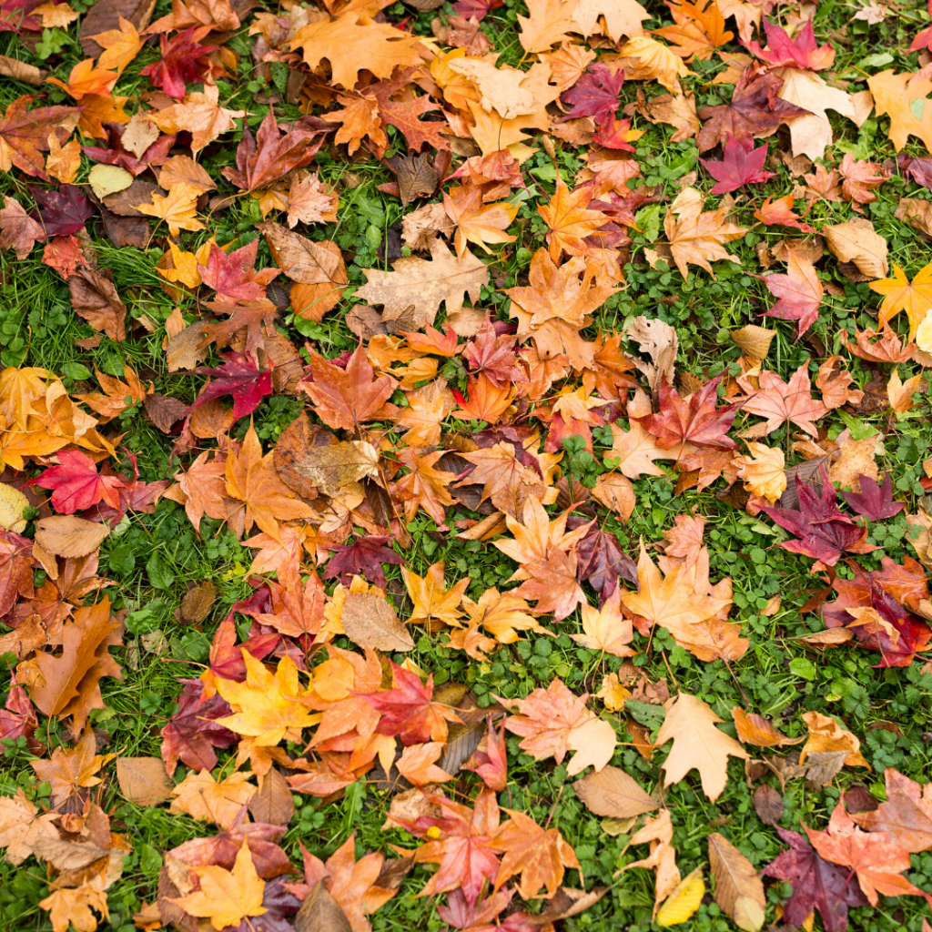 How to clean up leaves