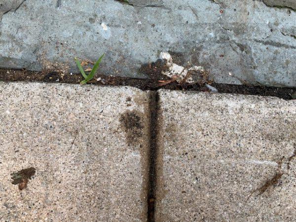kill ants instantly