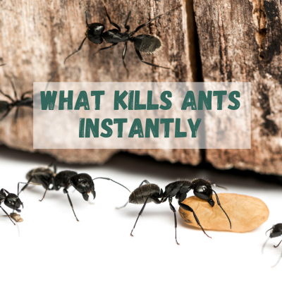 what kills ants instantly